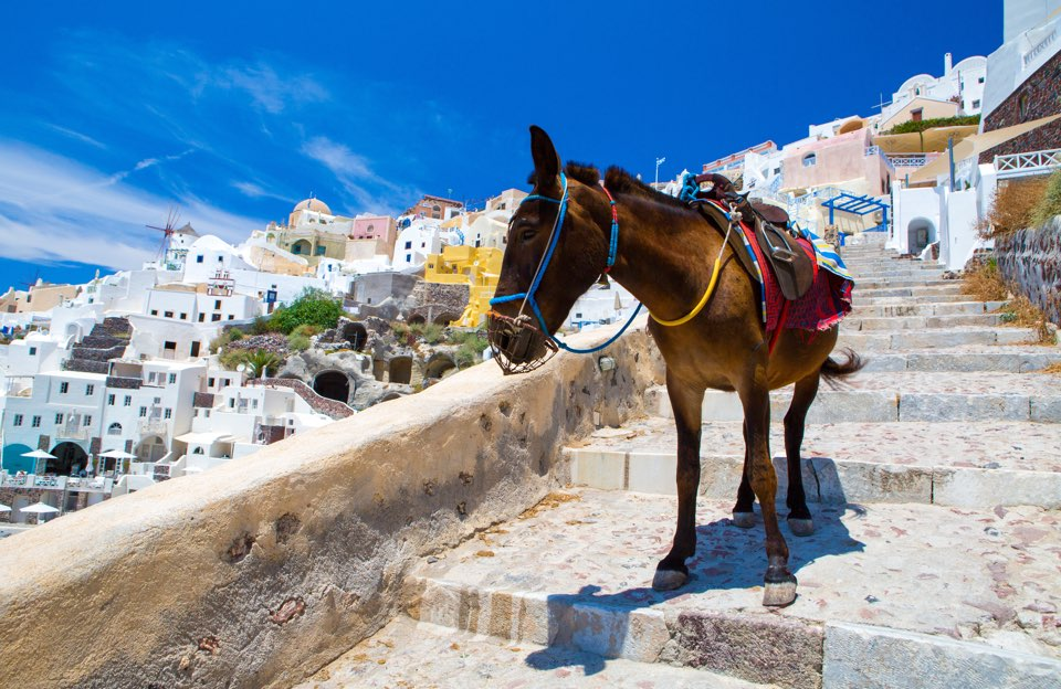Program excursions including cultural tours and culinary experiences.