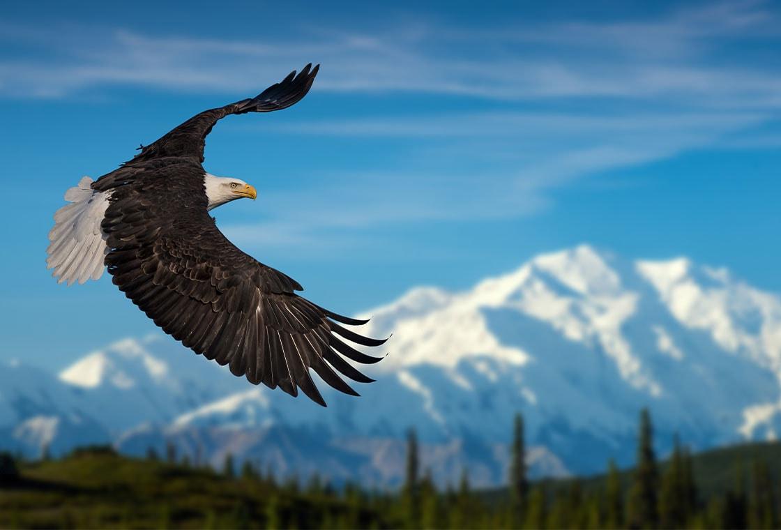 Thumbnail image from Alaskan Heritage & Wildlife