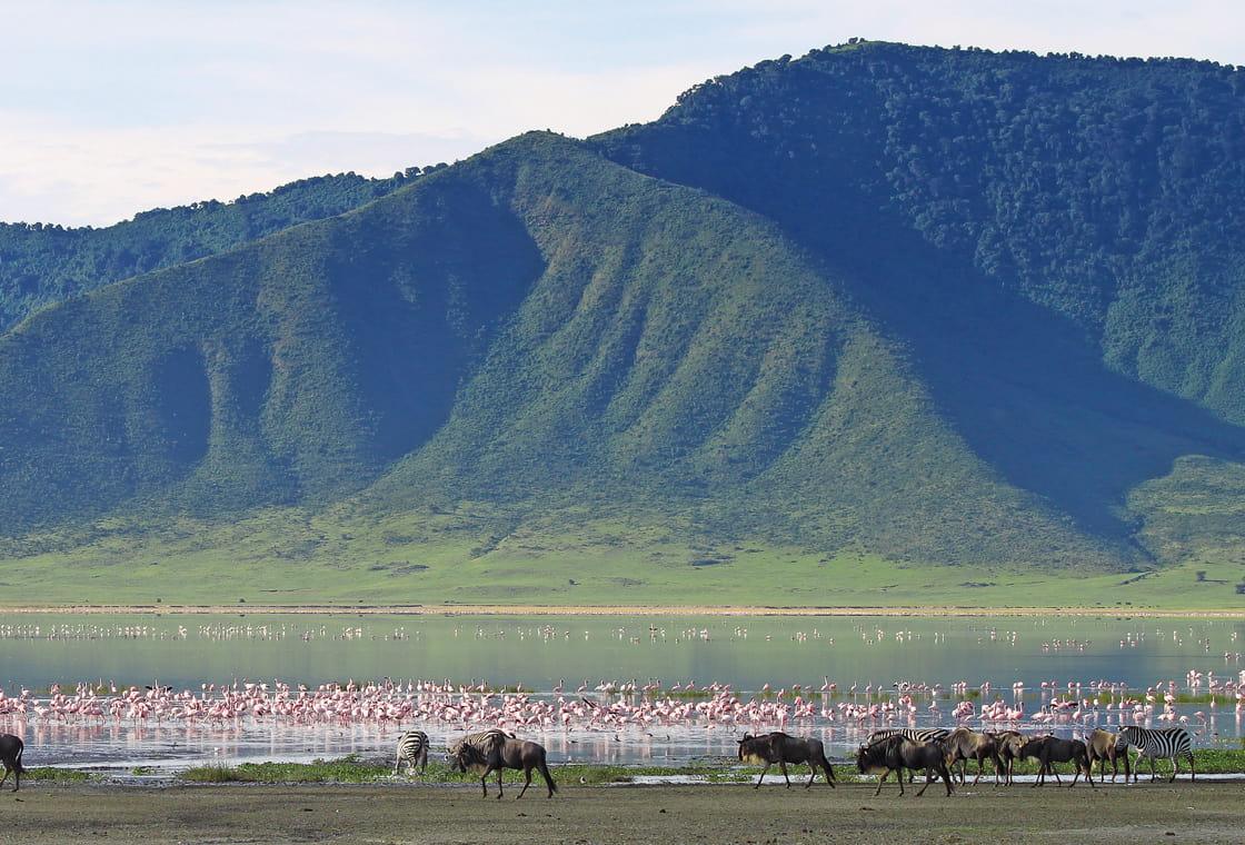 Thumbnail image from Tanzania Safari